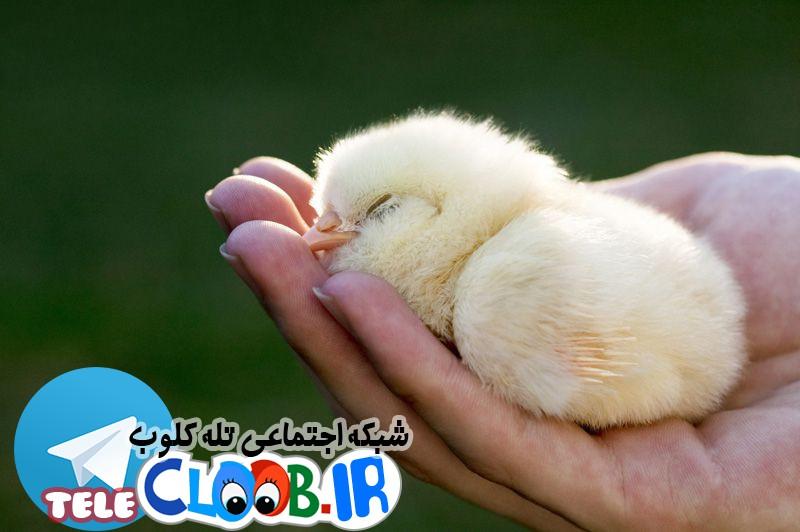 حقوق حیوانات